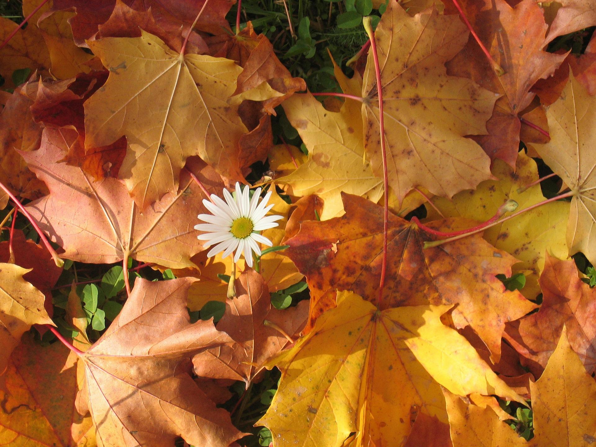 autumn-77992_1920